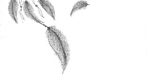 Motif Tatouage Noir Et Blanc: Attrape Rêve En Pointillisme Noir Et Blanc Sur Feuille