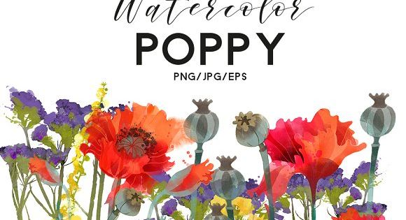 watercolor collection of Poppy flowers
