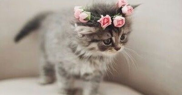 Flower Crown Kitty Cute Animals Cats Adorable Animal Pets Kitten