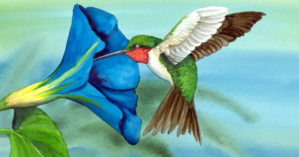 This painting shows a Ruby Throated Hummingbird exploring ...