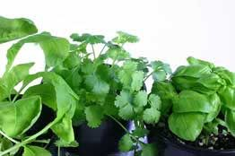 Growing Culinary Herbs For Profit Herbs Growing Herbs