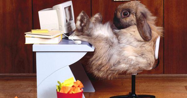 Картинки по запросу funny животные
