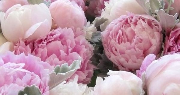 So sweet. Peony is my new favorite flower. Although it is a