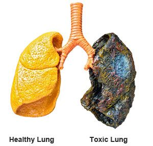 Learn About The Amazing Power Of Allertrex For Lung Cleansing And Respiratory Support In 2020 Lung Cleanse Healthy Lungs Lunges