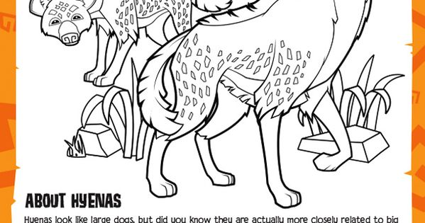 Hyena Coloring Sheet Animal Jam Academy Learn About