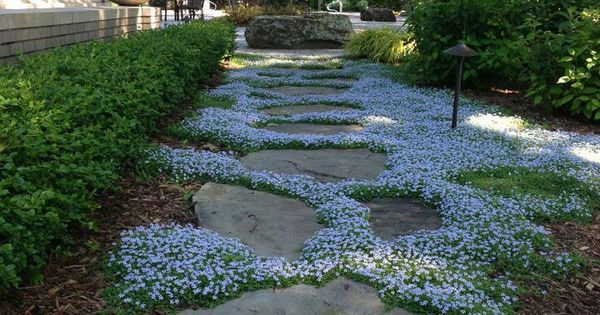 I Love The Flowering Ground Cover Between These Stepping