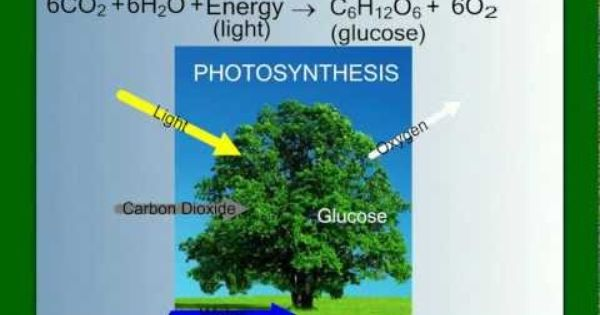 an overview of the photosynthesis in the plant life Lesson summary: this week students will watch a video explaining photosynthesis students will  what are the raw materials needed by plants for photosynthesis _____ _____ 2 co 2.