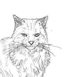 Hunde Und Katzen Zeichnen Mit Bildern Katze Zeichnen Katze
