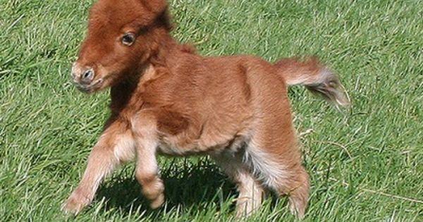 Mini horse! It looks like a stuffed animal come to life!
