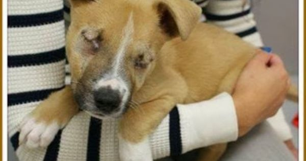 Houston Spca Uses A Blind Puppy To Raise Big But Kills All Pit Bulls Including The Blind Puppy In This Picture Pitbulls