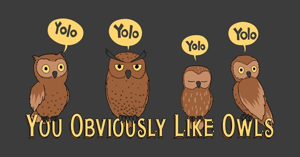 YOLO (owls,yolo,obviously) laughed at this!!