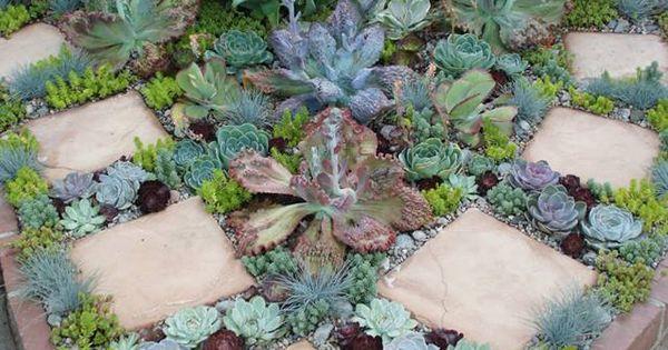J 39 Adore Ce Parterre De Plantes Grasses De Toutes Sortes Paysager Son Jardin Pinterest
