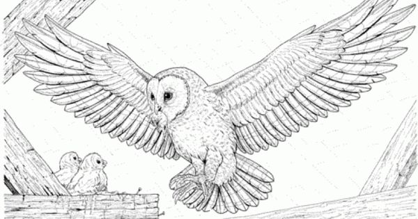 Realistic Owl Coloring Page Printable Letscolorit Com Owl Coloring Pages Animal Coloring Pages Owls Drawing
