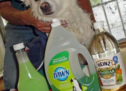 Natural Dog Shampoo - Flea Killer