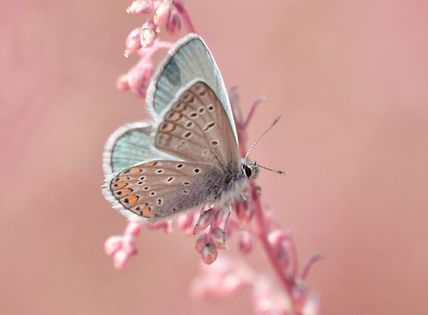 Beautiful butterfly on a pink flower.