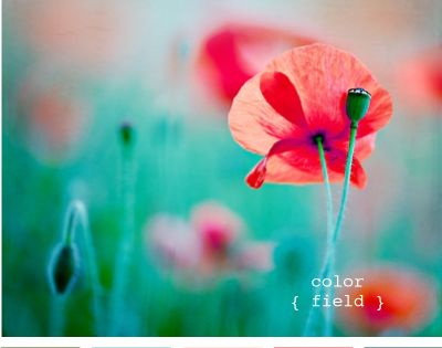 color field poppy color palette