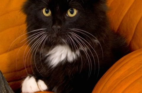 I takes dis one right here...pumpkin blackcat