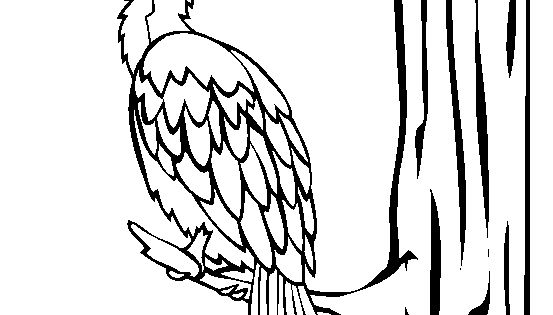 little pied cormorant coloring page free little pied cormorant online coloring birds pinterest coloring pages page and coloring