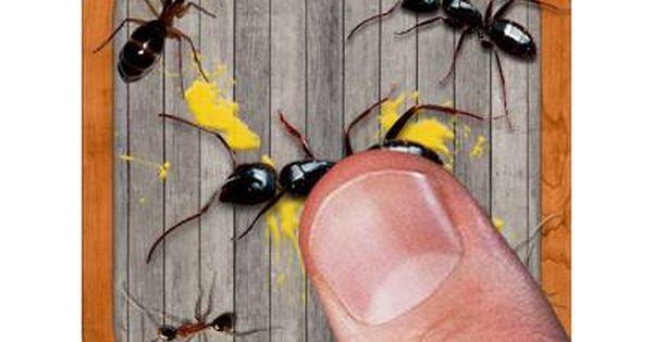 تحميل لعبة سحق النمل 2017 Ant Smasher أفضل لعبة خفيفة Free