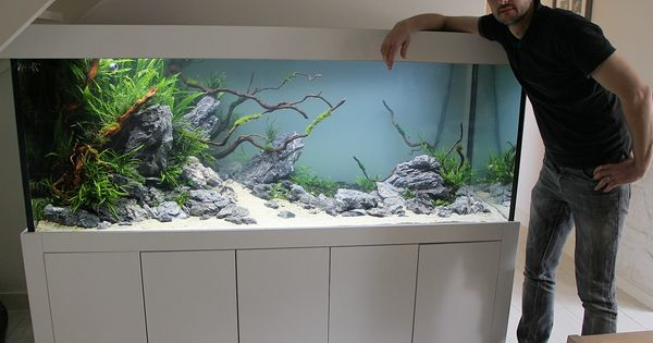 new customer tank 1 day old aquascaping by oleg foht aquascaping pinterest aquarium. Black Bedroom Furniture Sets. Home Design Ideas