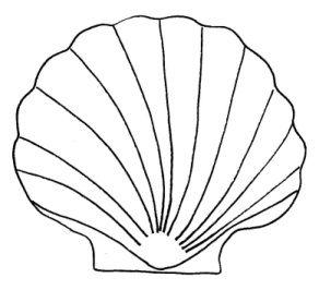 Scallop Shell Template Seashells Template Templates Printable