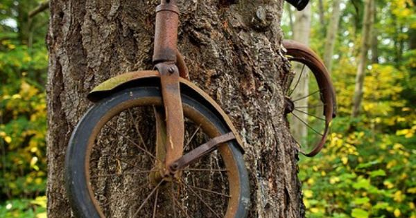 A boy left his bike chained to a tree when he went