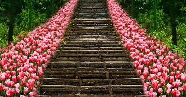 Tulip Stairs, Kyoto, Japan. flowers tulips kyoto japan travel photography