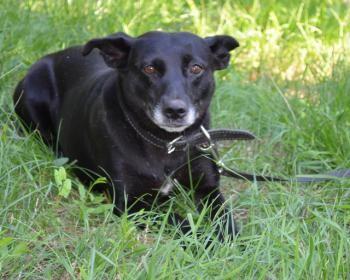 Hunde Ab 5 Jahren Hunde Hunde In Not Hunde Vermittlung