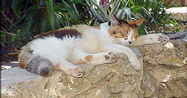 One Of Ernest Hemmingway Cats 3 Tiere