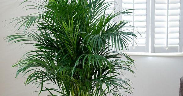 5 plantes mettre dans la chambre pour passer une nuit - Plante verte pour chambre ...