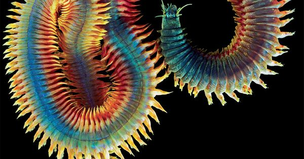 Animal Earth: New Photos Exploring the Diversity of the World's Most Obscure
