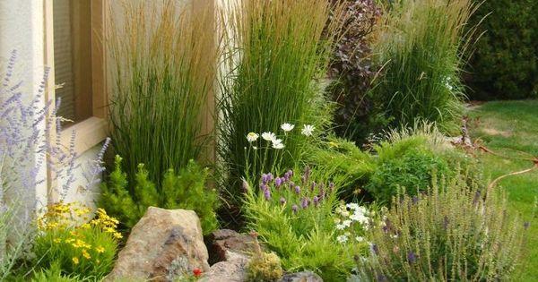 Backyard Landscape For Wet Area Home Landscape