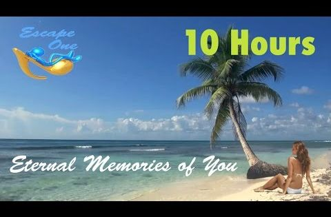 Suave Smooth Palm Beach Lyrics