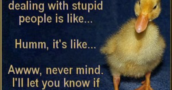 Pinterest Funny Crazy Quotes: Stupid People Quotes, Funny
