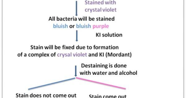 Understanding Microbiology - verywellhealth.com