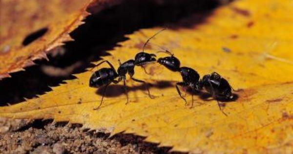 76aaaefb5699c9da73590052d250d301 - How To Get Rid Of Ants In Food Cupboard