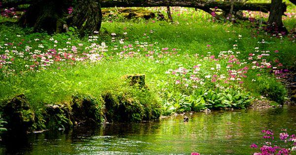 Gardens: Garden stream.