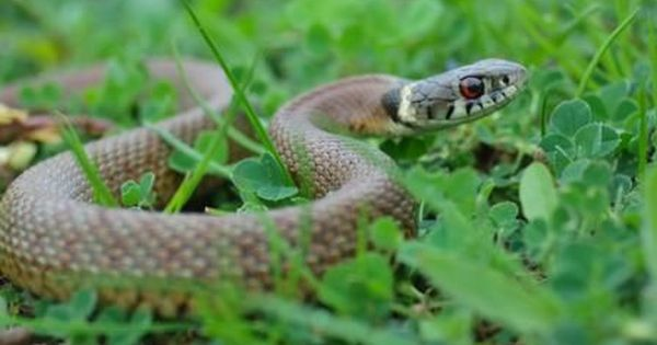 76b0495400a8e1354421ffde740e4624 - How To Get Rid Of Copperhead Snakes In Your Yard