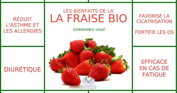Les bienfaits de la fraise la fraise le monde s 39 eveille gr ce nous tous le saviez vous - Bienfait des fraises ...