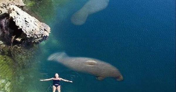 (via Places to see / As manatees cant survive in water below