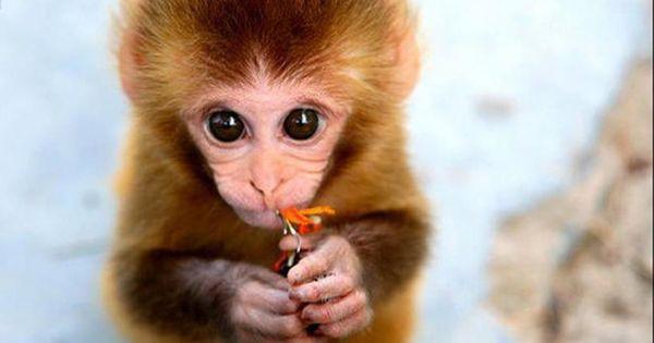cute monkey holding flower