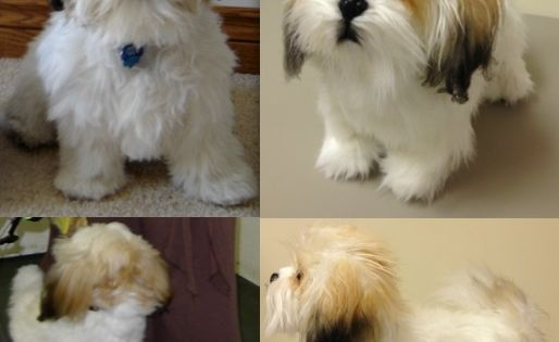 This Site Will Make A Stuffed Animal Clone Of Your Dog Custom Stuffed Animal Dog Stuffed Animal Shih Tzu Stuffed Animal