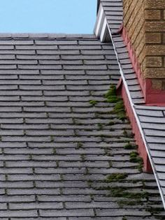 How To Remove Moss From The Roof House Cleaning Tips Roof Cleaning Deep Cleaning Tips