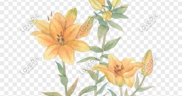 28 Gambar Bunga Bakung Kartun Di 2020 Bunga Gambar Kartun
