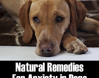 Natural Dog Prozac