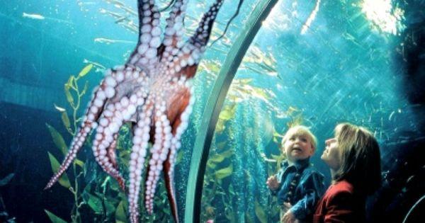 Aquarium Of The Bay Sf Wharf Pass Activities Pinterest