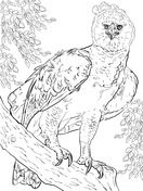 American Harpy Eagle Coloring Page Free Printable Coloring Pages Coloring Pages Eagle