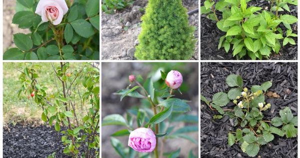 How to create a low maintenance flower bed these are for Low maintenance plants for flower beds
