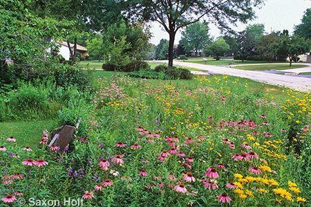 A Mini Prairie Meadow As A Front Yard Garden Meadow Garden Prairie Meadows Front Yard Garden