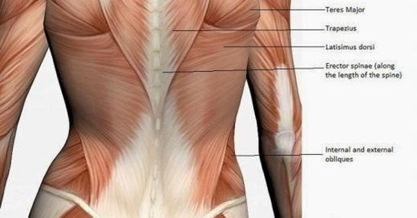 how to lose the lower back fat